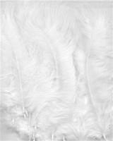 VEREN: Marabou veren Wit H&C Fun 12228-2802 15stuks/ca.12cm