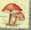 Servet: Paddestoelen Lepiola Proceta 3 stuks OP=OP 33 x 33 cm